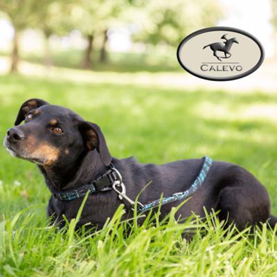Eskadron - SET Hundehalsband + Leine CHECK - CLASSIC SPORTS CALEVO.com Shop