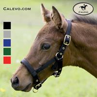 Kieffer - Fohlenhalfter aus Nylon, weich unterlegt CALEVO.com Shop