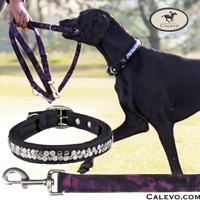 Eskadron - SET Hundehalsband+Leine VINTAGE - NEXT GENERATION CALEVO.com Shop