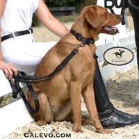 Eskadron SET Hundehalsband+Leine Satin CRYSTAL PLATINUM 2015 CALEVO.com Shop
